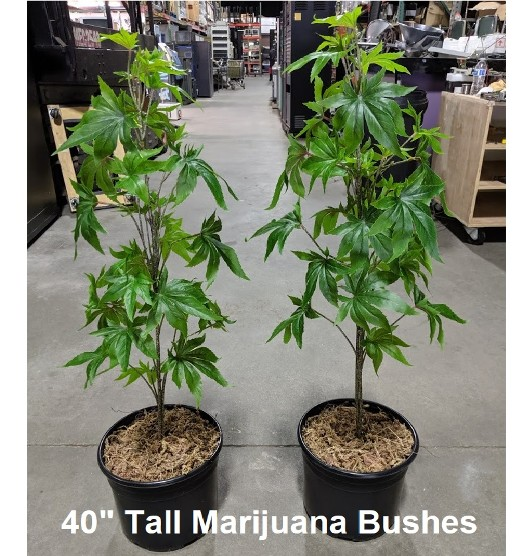 Fake Marijuana Plants